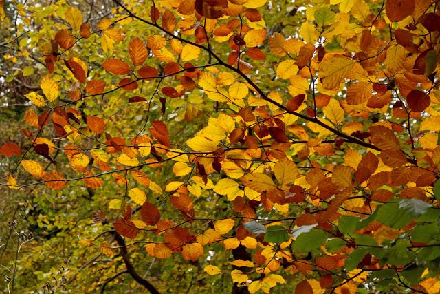 jesień, dlaczego nie choruje, sposoby na wzmocnienie odporności, jak wzmocnić odporność