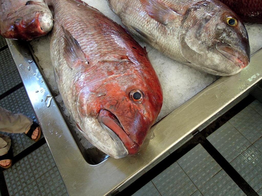 wielka_ryba