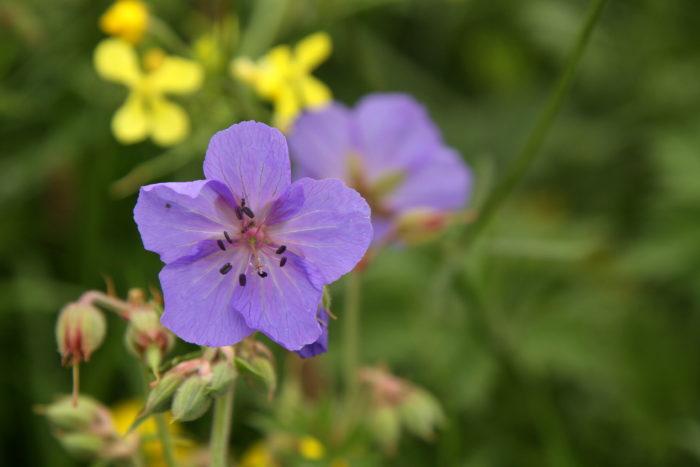 kwiatki na Bute