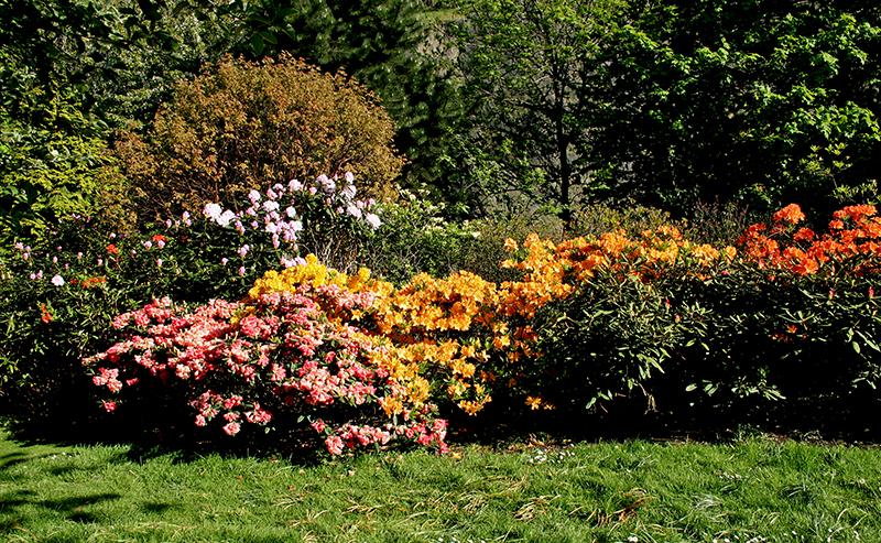 spring in princes street gardens