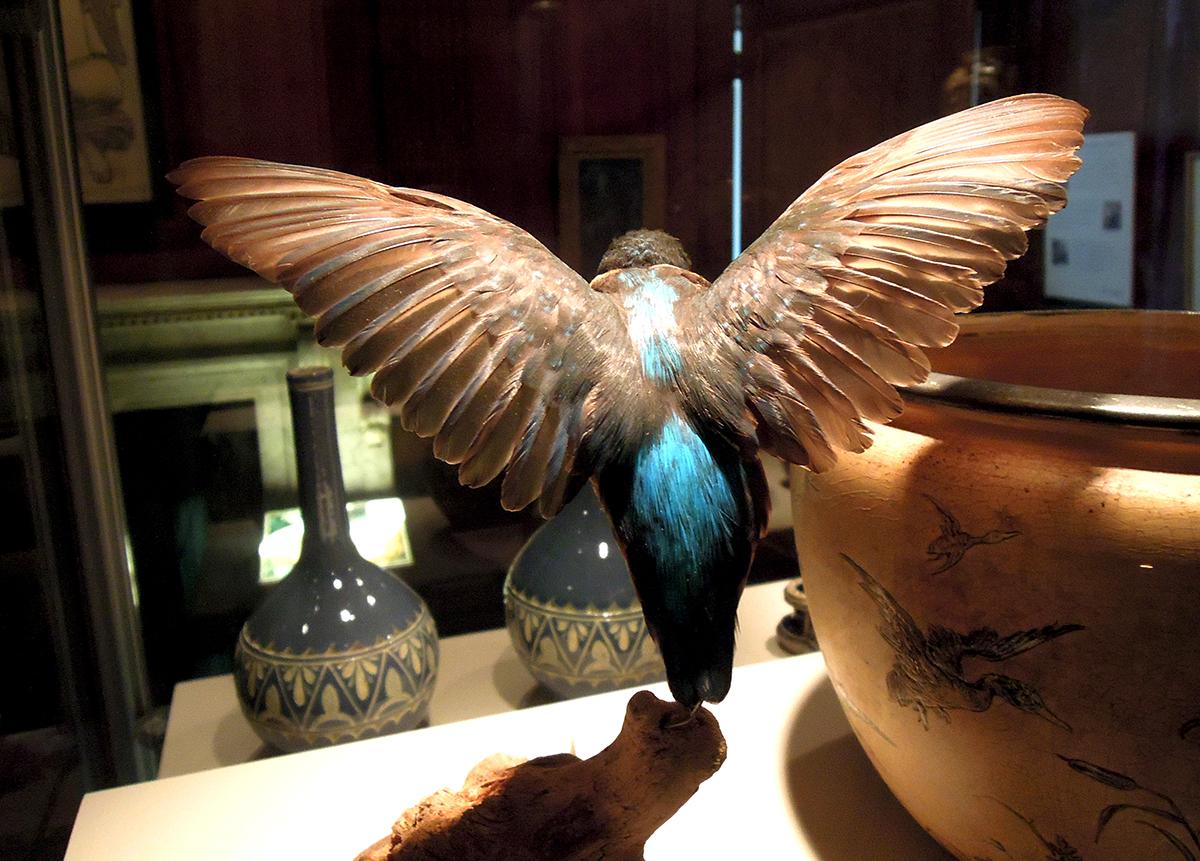 muzeum tullie