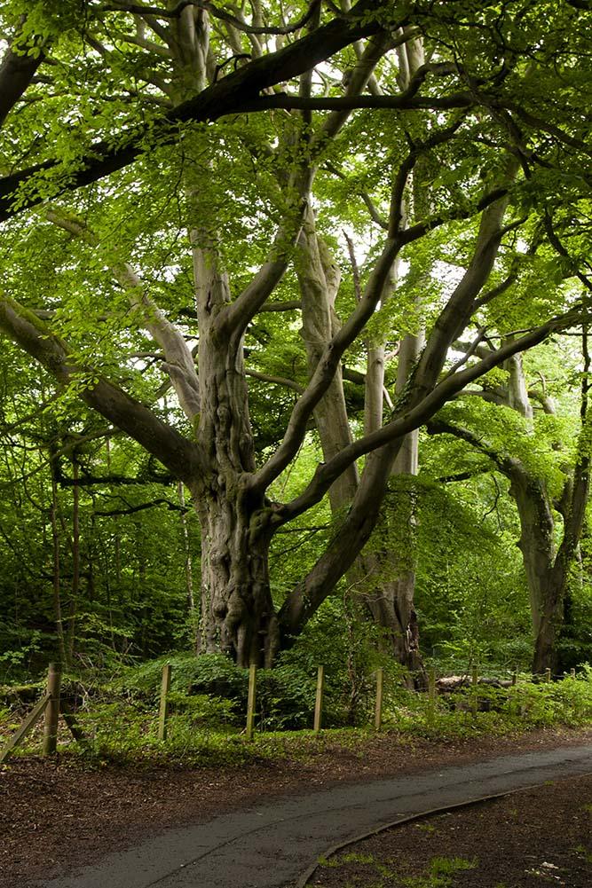 park drzewa szkocja