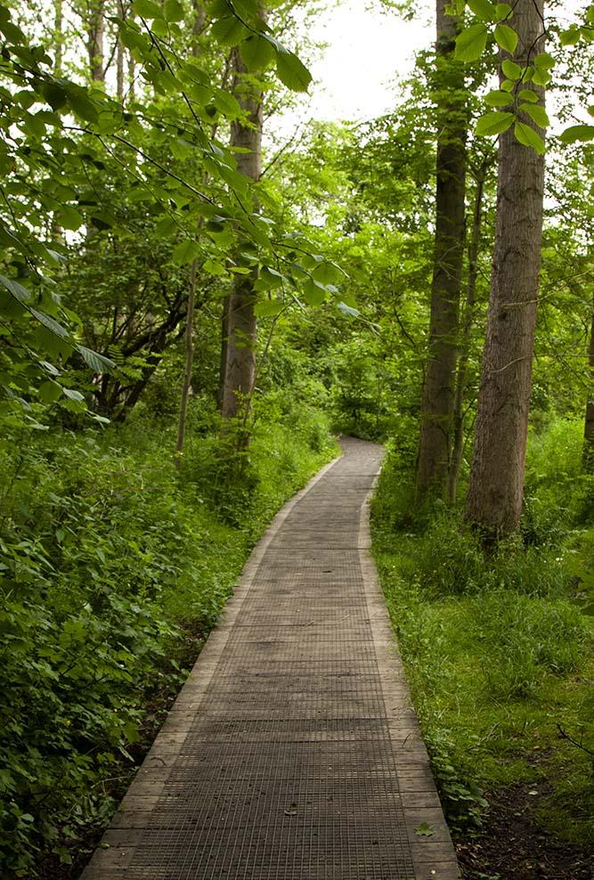 Murieston trail path