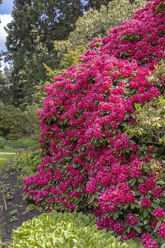 ogród botaniczny w Edynburgu